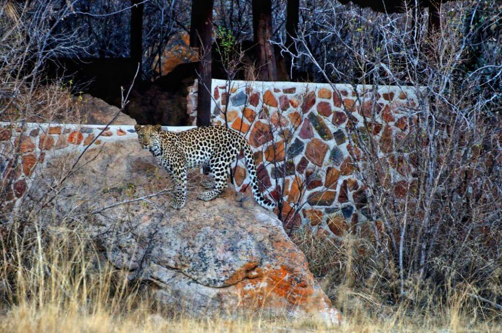 wildlife-gallery-1