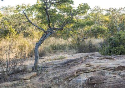Nyathi Stand 103 (26 of 28)