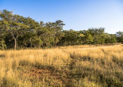 Nyathi Stand 103 (8 of 28)