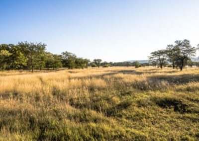 Nyathi Stand 103 (9 of 28)