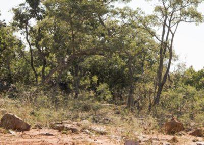 Nyathi Stand 129 (2 of 3)