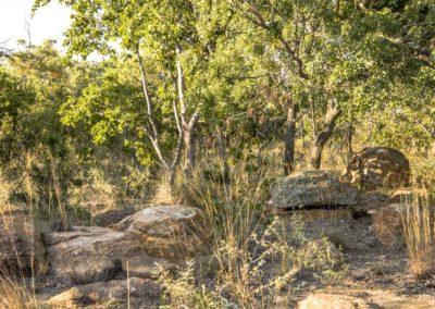 Nyathi Stand 129 (8 of 19)