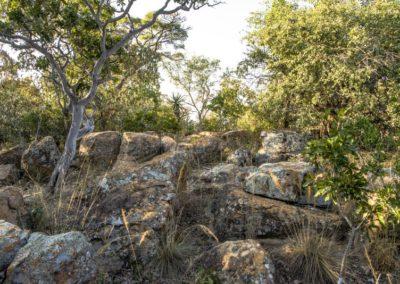 Nyathi Stand 129 (9 of 19)