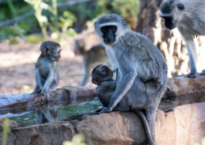 31-mother-and-baby--monkey