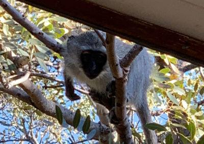 32-monkey-in-tree